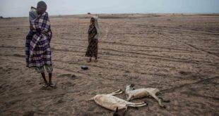 وفد #الهلال_الاحمر_الكويتي يتفقد الوضع الإنساني المأساوي في منطقه سناج الصومال نتيجه نقص المياه والمواد الغذائية